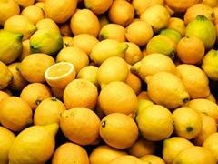 Lemons Hans Hillewaert