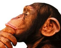 Thinking Chimp