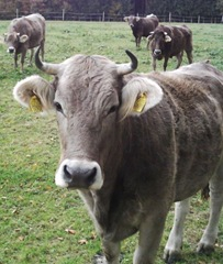 Cattle Crop